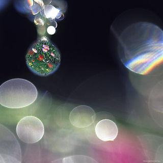 Dewdropsflowers