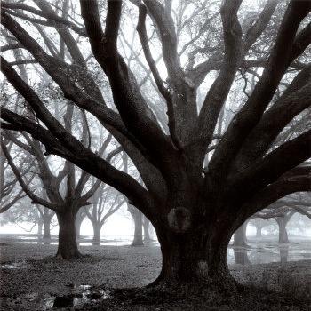 Oakgroveinwinter