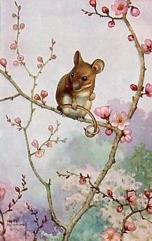 Mouseonflower