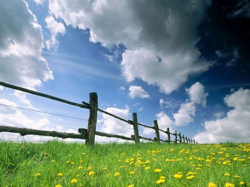 Summer_grass_zastavki_com_5058_9
