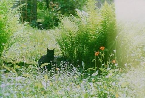 Kittygarden